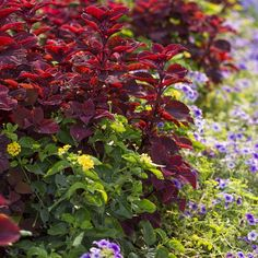 Vibrant combinations on #mossmountainfarm #garden #ilovegardens @provenwinnersplant #joy #jobesorganics #sharethebounty