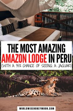 This is hands down the best Amazon Rainforest Lodge | Amazon Rainforest Animals | Amazon Rainforest Travel | Amazon Rainforest Photography | Peruvian Amazon Rainforest | Peruvian Amazon Travel | Peru Travel | Tambopata Research Center | Tambopata Peru National Reserve #tambopataresearchcenter #peruvianamazon #amazonrainforest #peru Peru Travel, Travel Usa, Travel Tips, Travel Guides, Amazon Rainforest, Rainforest Animals, Travel Couple, Family Travel, Beautiful Places To Visit