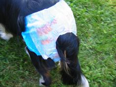 Dog Diapers, Cheap Homemade Dog Diapers That Stay On~Swimmers Diapers for the pool. I'm going to definitely try this for Maddie when she goes into heat. We haven't yet decided if we will breed her or not. This seems like a good solution and a cheaper alternative.