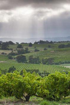 Australia, Fleurieu Peninsula, Mclaren Vale Wine Region, Vineyard View Photographic Print
