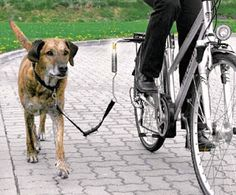 Comtú Gourmets: Como llevar a tu Perro en Bicicleta