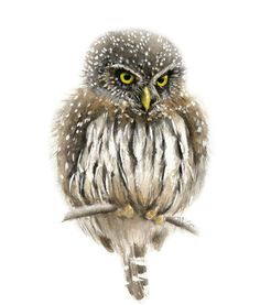 Owl watercolor - Owl Painting - Bird Art Print - Home Wall Decor - Bird Watercolor Illustration. Watercolor Fish, Watercolor Animals, Watercolor Paintings, Bird Paintings, Owl Wall Art, Paper Wall Art, Paper Paper, Bird Illustration, Watercolor Illustration