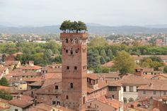 Tuscany By Train ~ 10 Fabulous Day Trips From Florence - Corinna B's World By Train, Lucca, Urban Farming, Time Travel, Day Trips, Tuscany, Rooftop, Florence, Paris Skyline