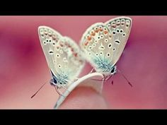 Abraham Hicks - Butterflies of Alignment - YouTube