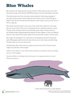 humpback whale print out with interesting facts about humpback whales whale in the bath. Black Bedroom Furniture Sets. Home Design Ideas
