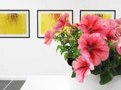 A genetically-engineered flower that is a hybrid of the artist and a petunia Science Art, Petunias, Genetics, Glass Vase, Italy, Artists, Flowers, Plants, Design