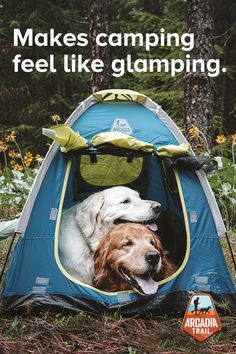 Utility meets comfort with the Arcadia Trail Lightweight Shade Tent and more outdoor gear, only at PetSmart. Cute Funny Animals, Cute Baby Animals, Animals And Pets, Cute Puppies, Dogs And Puppies, Cute Dogs, New Puppy, Puppy Love, Chen