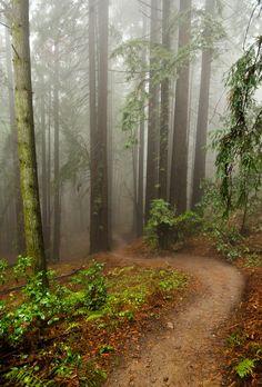 Redwood Fog - Foggy Rain rolling through redwood forests of santa cruz california