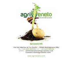 Lavorazione e confezionamento di #patate e #cipolle in #Veneto
