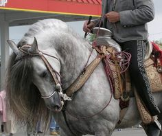 Andalusian horse, you can't tell me that isn't a beautiful horse!