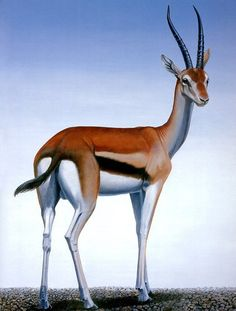 Рыжая газель (Eudorcas rufina), север Алжира и Марокко. Известна всего по трем экземплярам, найденным на алжирских рынках в 1894 г. Причины вымирания точно не установлены; скорее всего, вид сгубило опустынивание севера Африки. Валидность вида неясна.