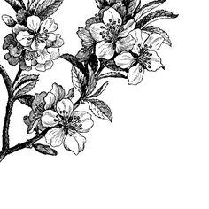45€/m2 Springtime, black&white | R12652 | Papier Peint Panoramique | Rebel Walls France