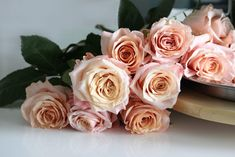 Rose Shimmer a perfect blend of elegance and durability, peach garden roses, roses with countless petals
