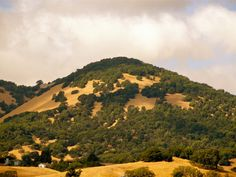 Mount Burdell in Novato