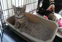 Bobbi has been adopted!