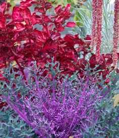 5 ways to add color to a fall garden