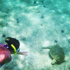 Swimming with sea turtles in Tobago Cays!  |  photo via 120roll on Instagram  |  #caribbean #turtles #grenadines #diving #snorkeling #vacation #svg #adventure