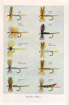 Vintage Print, Trout Fishing Flies, Art Illustration, Wall Decor, Double Sided, Dry Flies,