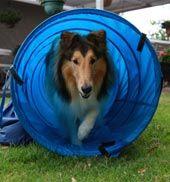 Loveyourdog.com - basic dog training commands for your dog...