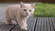 Do you love cats? We have compiled a list of World's Most Beautiful Cats and after seeing this you wont have a reason to not love cats! Animals And Pets, Baby Animals, Funny Animals, Cute Animals, Nature Animals, Pretty Cats, Beautiful Cats, Animals Beautiful, Pretty Kitty