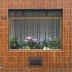 095 :: Martinsfeld :: Carreau de Cologne #carreaudecologne #tilesofcologne #koelschefliesen #fliesen #tiles #carrelage #ihavethisthingwithtiles #tileaddiction #ihaveathingforwalls #köln #kölle #cologne #visitkoeln #hiddencologne #thisiscologne #koelnergram #365cologne #koelscheecken #liebedeinestadt #kölnarchitektur #colognearchitecture #architecture #facade #texture #minimalism #grid #vscocam #vscogermany #urbanjungle by carreau_de_cologne