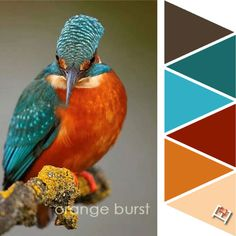 Orange burst Color Palette Paint Color Schemes, Colour Pallette, Color Combos, Paint Colors, Color Balance, Colour Board, Color Swatches, Color Of Life, Pantone Color