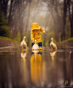 Little boy splashing in water with ducks + Yellow + Spring