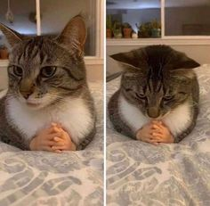 (3) Home / Twitter Funny Animal Memes, Cute Funny Animals, Stupid Funny Memes, Funny Animal Pictures, Cute Baby Animals, Cat Memes, Funny Cute, Cute Cats, True Memes