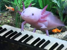 Playin' keyboard