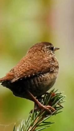 Most Beautiful Birds, Beautiful Photos Of Nature, Beautiful Flowers Wallpapers, Pretty Birds, Nature Pictures, Animals Beautiful, Weird Birds, Funny Birds, Cute Funny Animals