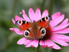 beautiful exotic butterfly pics | Exotic Butterfly | Lifestyle 2013
