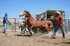 Navajo Nation sends horses to slaughter Posted: 2:58 pm, August 19, 2013 by jfinch. Article. Posted to Desert Hearts on  - 8/20/2013 DESERT HEARTS Animal Compassion https://www.facebook.com/desertheartsphoenix