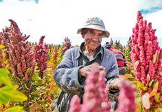 Productores de Quinua se capacitan en el Cauca [http://www.proclamadelcauca.com/2015/05/productores-de-quinua-se-capacitan-en-el-cauca.html]