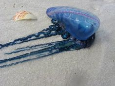 Portagee-man-o-war on the beach. I was was stung by a grandfather of a Portuguese man-of-war! Scary Animals, Dangerous Animals, Portuguese Man O' War, Man Of War, Fire Island, Life Aquatic, Underwater Creatures, Pink Balloons, Make A Gift