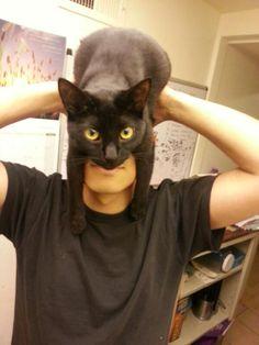 @EmrgencyKittens: catman