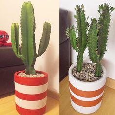 Eles já são queridinhos por aqui: cacto em vaso Gabriela com customização de cores. Pediu o seu?  #oitominhocas #cactus #cactilove #decoracao #vasogabriela #maisverde #plantinhasemcasa