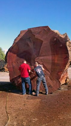 Our newest arrival. This Sequoia log is 13' diameter and over 2600 years old. That's means it predates the existence of the United States, the Dark Ages, the birth of Christ, and the Roman Empire. Now that's impressive!