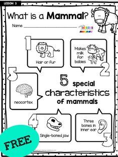 Kindergarten Science Experiments, Kindergarten Lesson Plans, Kindergarten Learning, Science Worksheets, Preschool Learning Activities, Preschool Classroom, Science Lessons, Lessons For Kids, First Grade Lessons
