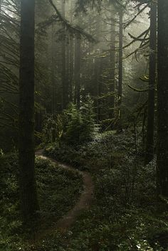 "Earth It was in the forest that I found ""the peace that passeth all understanding."" ~ Jane Goodall - Misty forest at Silver falls area, Oregon Misty Forest, Dark Forest, Forest Path, Forest Trail, Wild Forest, Conifer Forest, Forest At Night, Forest Scenery, Evergreen Forest"