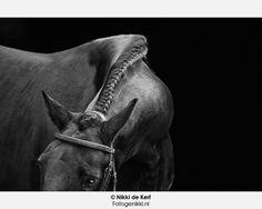 Nikki de Kerf : Horses in black and white