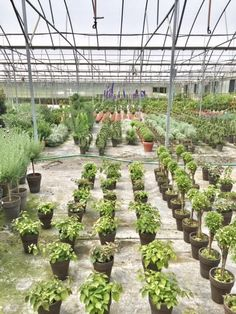 favorite plant sourc