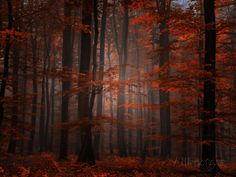 Spiritual Wood Photographic Print by Philippe Sainte-Laudy at AllPosters.com
