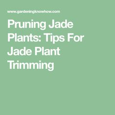 Pruning Jade Plants: Tips For Jade Plant Trimming
