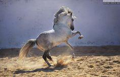 Best photographs of horses by Ekaterina Druz Equine Photography