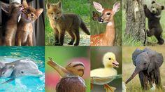 """Képtalálat a következőre: """"Az állatok világnapján"""""""