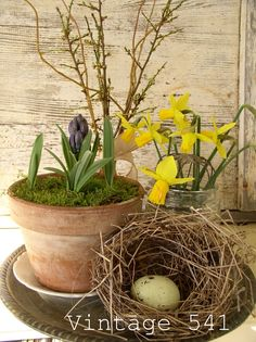Daffodils with nest, hyacinth and willow branches