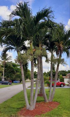 Palm, Plants, Christmas, Home Decor, Xmas, Decoration Home, Room Decor, Navidad, Plant