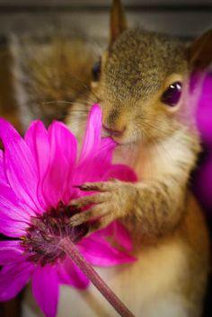 squirrel with klower - Hledat Googlem