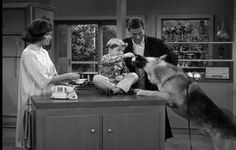 Larry Sorel     Buddy's dog, Dick van Dyke Show.  My favorite TV canine