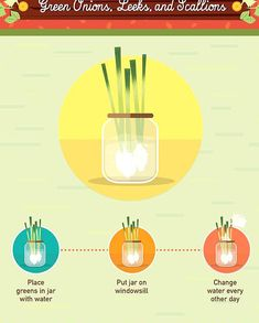 19 Foods You Can Regrow From Scraps #foodwaste Food Waste, Beets, Jar, Foods, Canning, Vegetables, Beautiful, Design, Food Food
